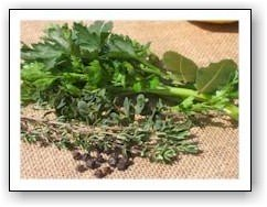 herbs for chicken stock